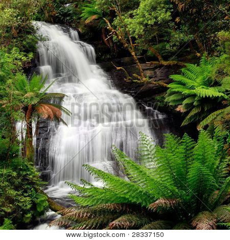 Waterfall in lush ferny rainforest.  XXXL file.  Triplet Falls, Otway Ranges, Victoria, Australia.