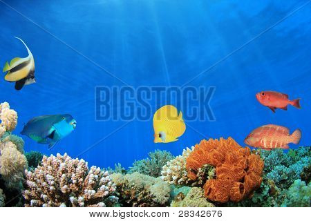 Digital Composite of Coral Reef with Tropical Fish in clear blue water