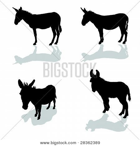 Donkey Four Animal Black Silhouette
