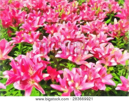 Flowerbed Of Lilies Bright Pink