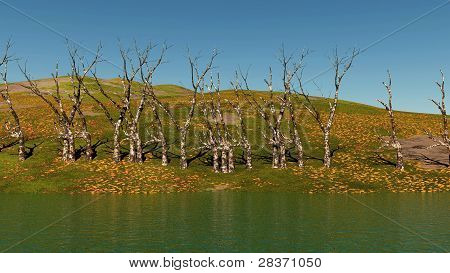dead trees on lake shore