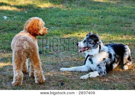 Doggy Friends Playing
