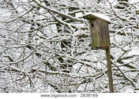 Jaula de pájaro en el árbol
