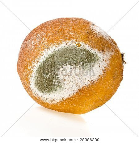 Moldy rotten  citrus fruit  isolated on a white background