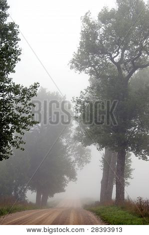 Gravel Road Sink In Misty Fog Surrounded By Trees.