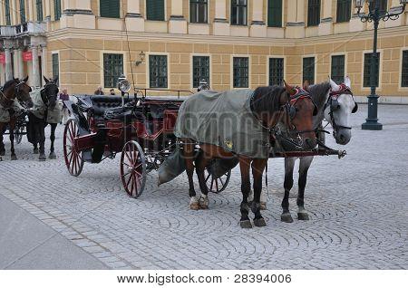 Horse Wagon at Vienna