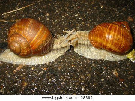 Two Snail