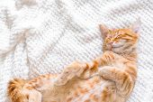 Ginger Cat Sleeping On Soft White Blanket, Cozy Home And Relax Concept, Cute Red Or Ginger Little Ca poster