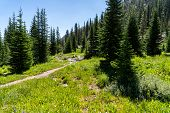 Beautiful Scenery Along A Dirt Hiking Trail (iron Creek Trail) Leading To Sawtooth Lake In Idaho poster