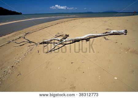 Sand And Tree