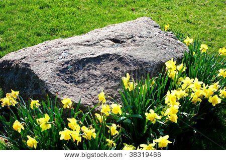 Flowers Around Large Stone