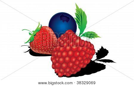Berry Mix - Blueberry, Cherry, Strawberry vector