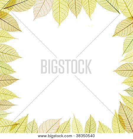 Frame With Transparent Leaf