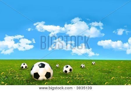 Soccer Balls  In A Field Of Tall Grass