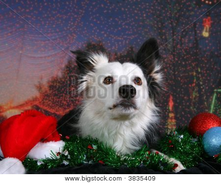 Holiday Dog Portrait