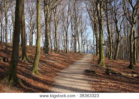 Lonely forest path
