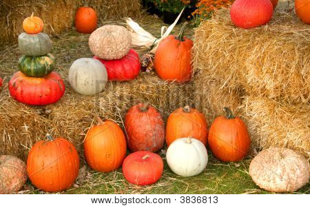 Pumpkin Arrangement