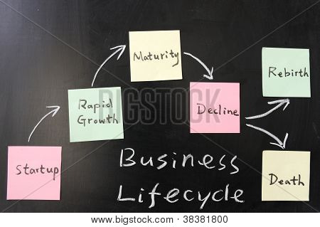Business Lifecycle  Concept