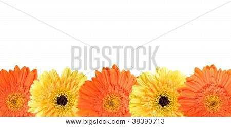 Yellow And Orange Daisy Frame