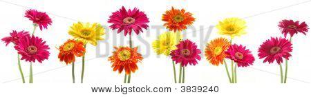 Bunch Of Gerbera Flowers