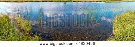 Summer Rushy Lake Panorama