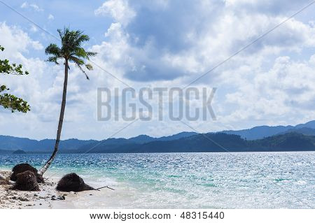 Lonely palm on a sea coast