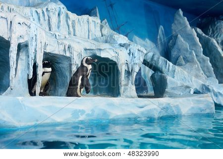 MOSCOW - NOV 4: Penguins in decorative cave in oceanarium at shopping mall RIO at Dmitrovsky highway, November 4, 2012, Moscow, Russia.