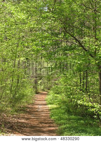 Duke Forest