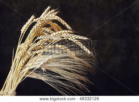 Wheat Ears On The Dark Wooden Background