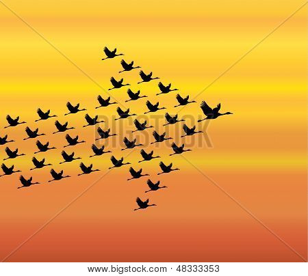 Leadership And Synergy Concept Illustration : A Number Of Swans Flying Against A Orange Sky Ba