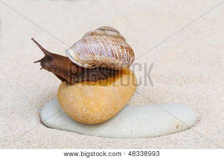 Caracol sobre la arena