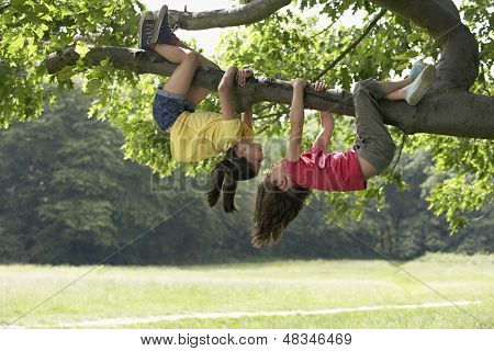 Full length of playful girls hanging upside down from tree branch