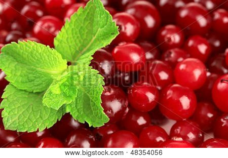 Ripe red cranberries, close up