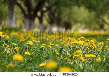 Frühlingspark