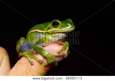 A green frog sits on a child's finger.