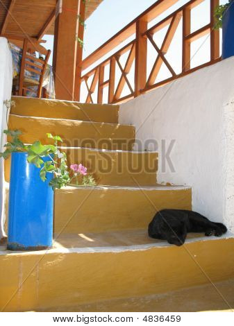 Black Cat On Yellow Stairs In Greece