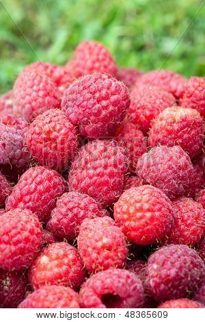 delicious red raspberries