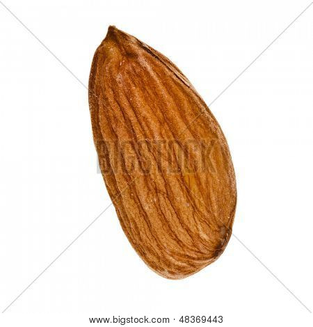 Single Almond Seed Close up Extreme Macro Shot isolated on a white background