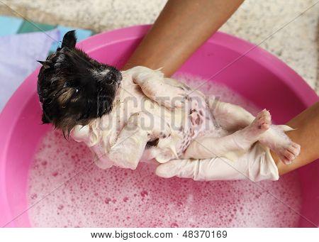 Puppy Dog In Bath Tub