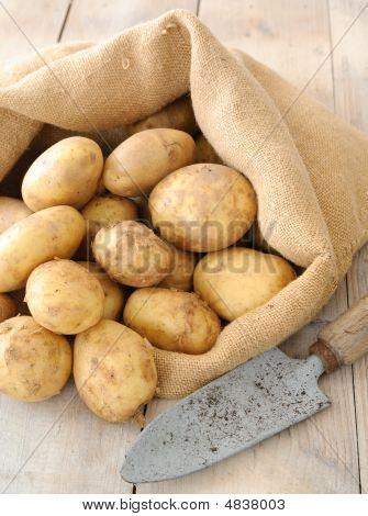 Patatas frescas orgánicas