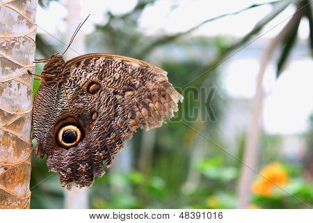 Butterfly sleep