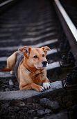 pic of mongrel dog  - Grieving dog - JPG