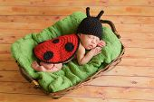 picture of ladybug  - Three week old newborn baby girl wearing a crocheted black and red ladybug costume and sleeping on a green blanket inside of a basket - JPG