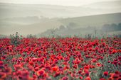 image of differential  - Beautiful Summer sunrise countryside field of poppies landscape with differential focus and shallow depth of field - JPG