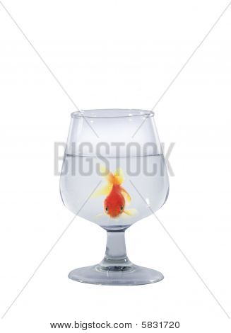 Goldfisch in Glas