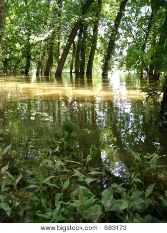 Flooder River Bank