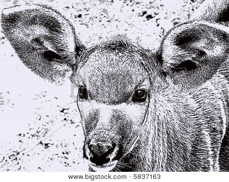 Wild Deer Illustration