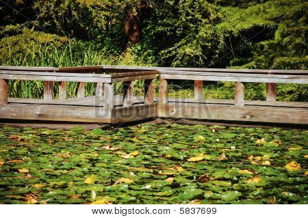 Dock on garden pond