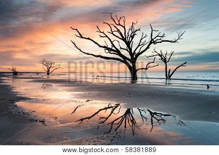 Charleston South Carolina Botany Bay Boneyard Beach Sunrise Tree Reflection