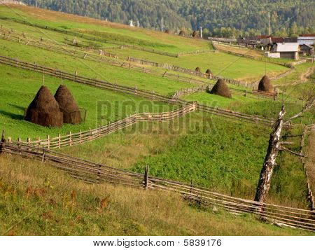 Rural Landscape. Tapered Haystacks On Green Grass Ground